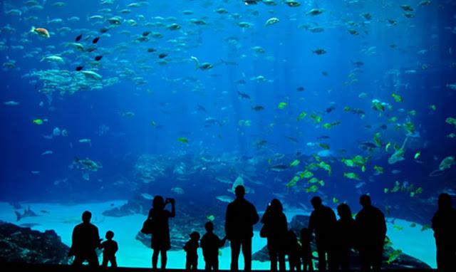 Aquário no Miami Seaquarium: o maior aquário da Flórida