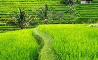 Tempat Wisata yang Wajib Anda Kunjungi di Bali