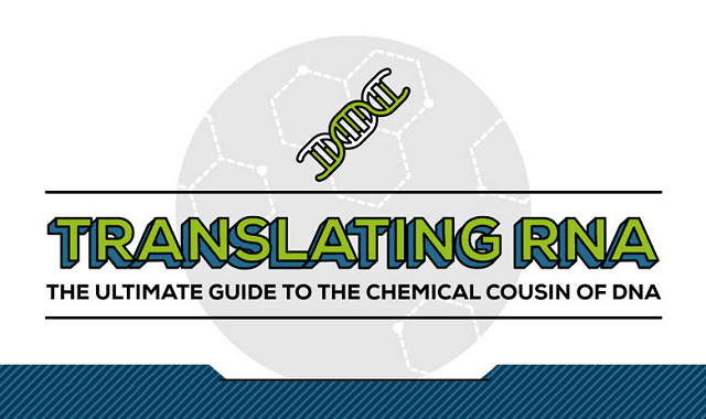 Translating RNA - The Ultimate Guide To The Chemical Cousin of DNA