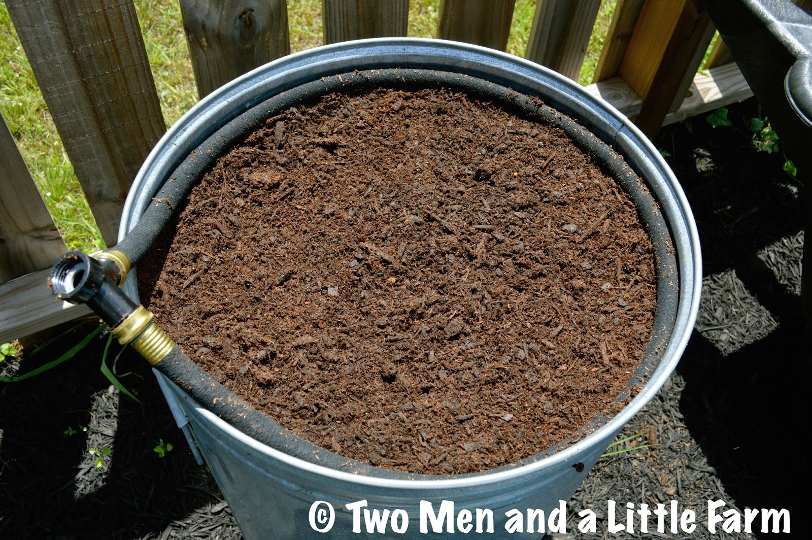 Two Men and a Little Farm: HOW TO GROW SWEET POTATOES IN A ...