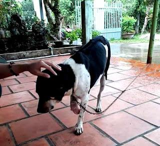 Người phụ nữ chặt chân chó: nhìn từ một góc độ khác