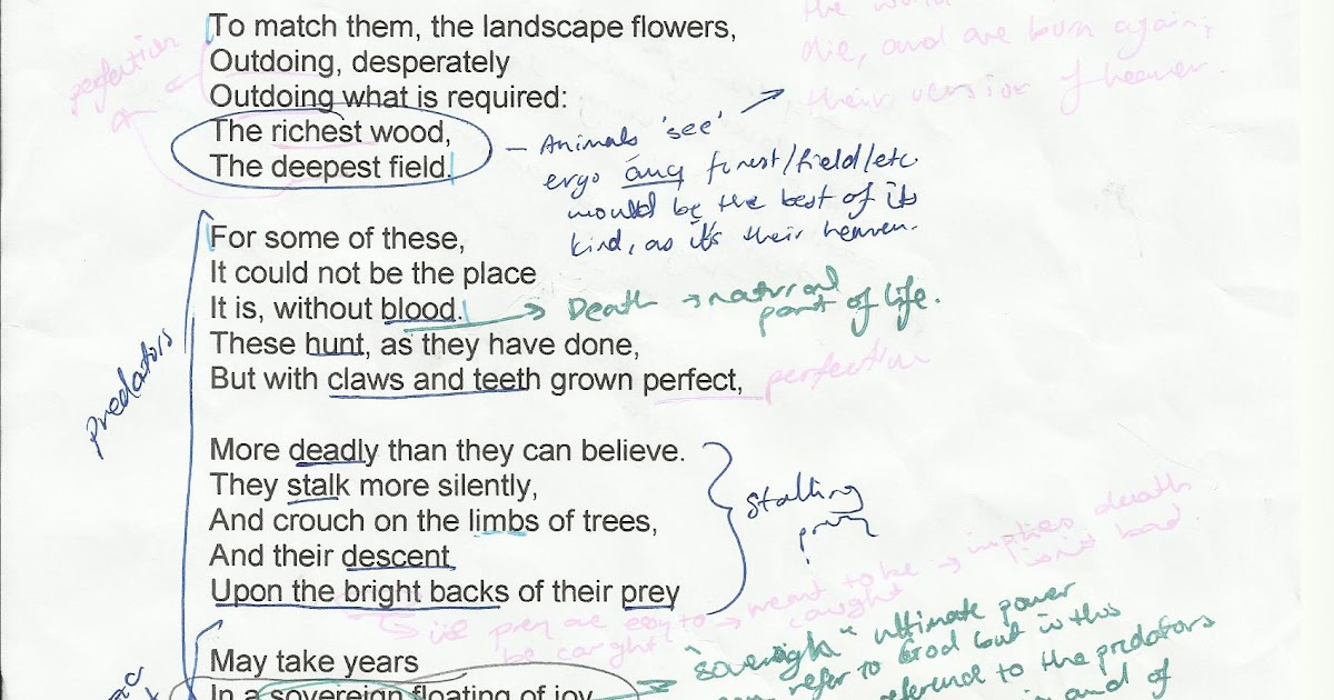The Nardvark: A Level-7 Essay for IB English Exam Paper 1