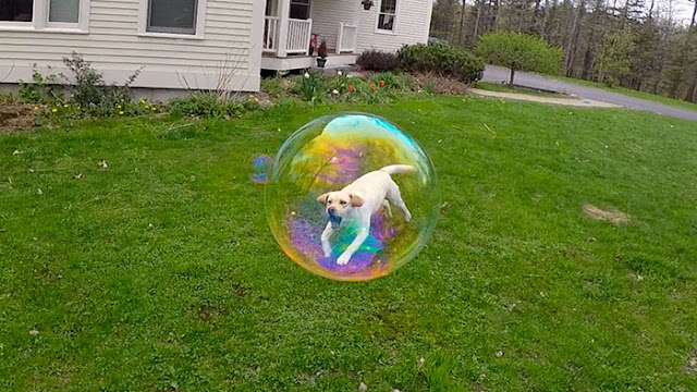 The dog in a bubble of Freeze-frame trapped