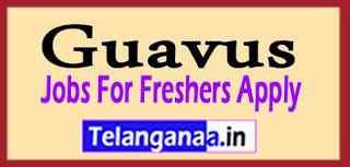 Guavus Recruitment Jobs For Freshers Apply
