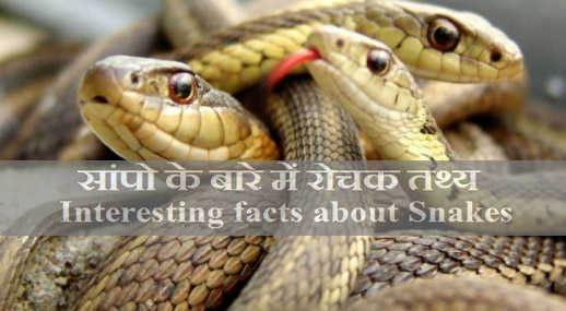 facts-about-snakes