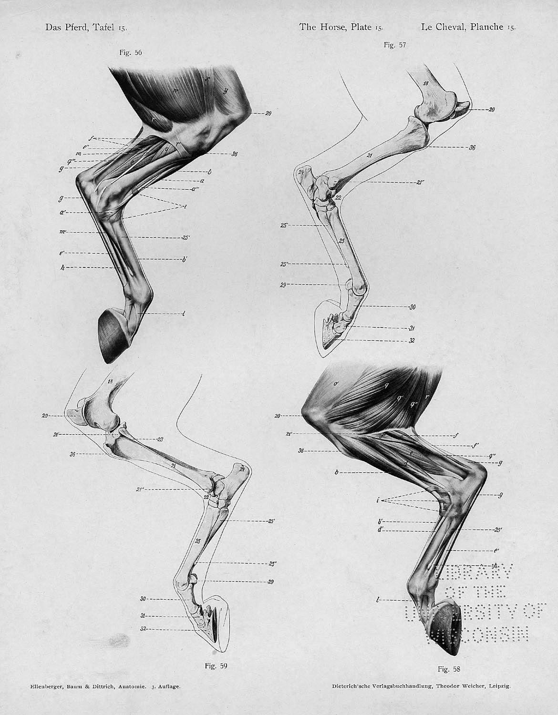anatomie text und atlas 9 auflage