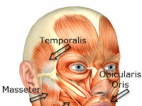 Facial Muscles Diagram