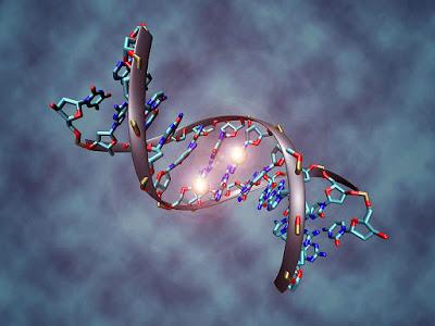 Regolazione epigenetica sviluppo neuroblastoma