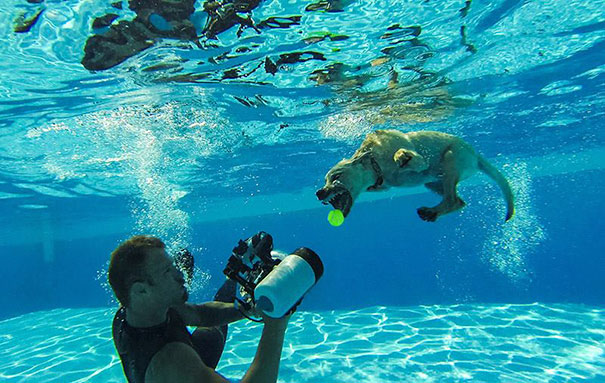 15+ Pics That Show Photography Is The Biggest Lie Ever - Underwater Dog