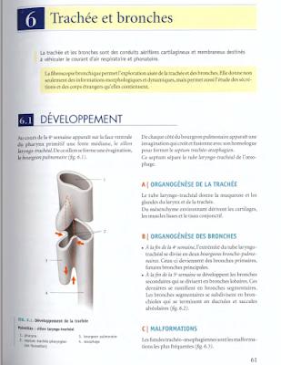 Télécharger Livre Gratuit ANATOMIE - Thorax - Trachée et bronches pdf