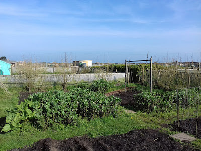 St Ives Cornwall Allotment - Spring - Blue Skies