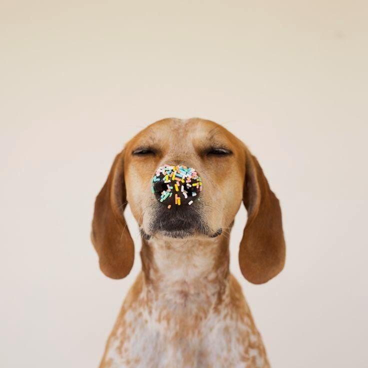 Het Keetje van Lien: Een heus hondenfeest