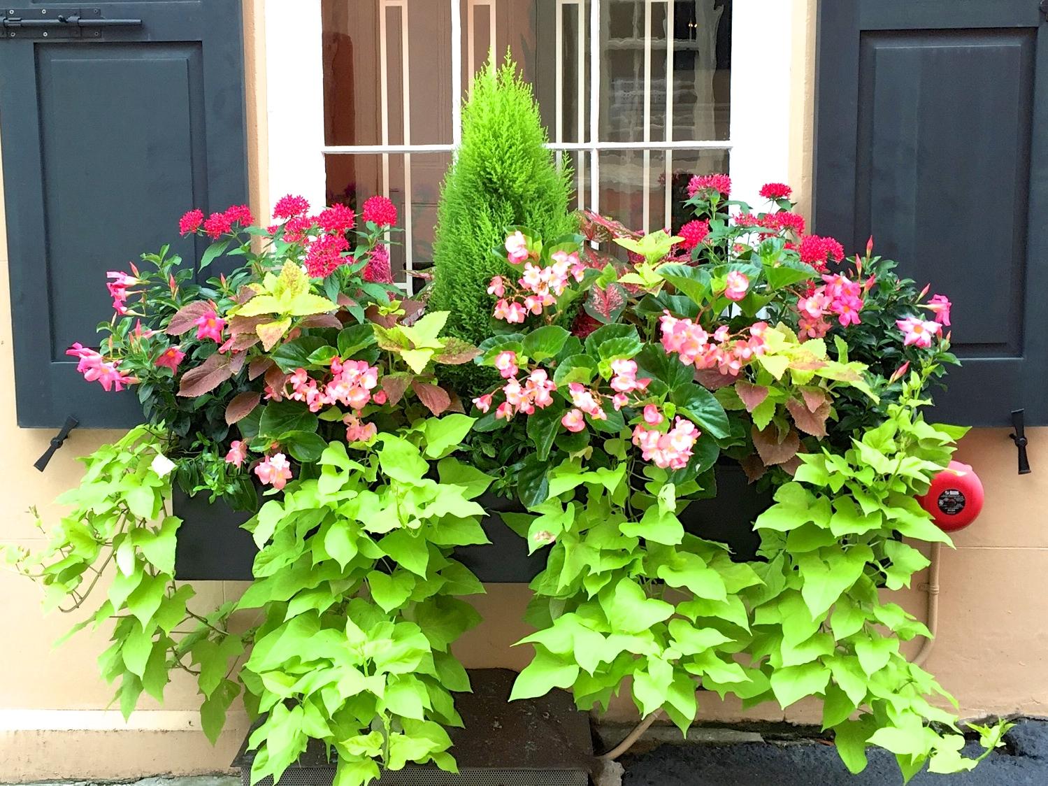 Jll Design Window Box Ideas Amp More Garden Inspirations