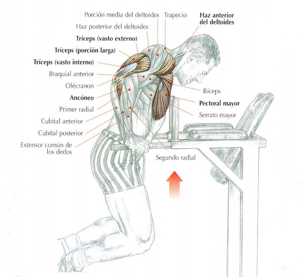 Los fondos en barras paralelas, cómo hacerlos, músculos implicados y consejos. | Rane Forti