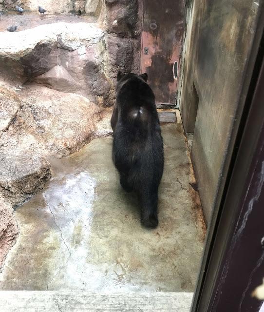 ハダカデバネズミや歩く植物??上野動物園で見逃せないなおすすめ動物8つ【n】エゾヒグマ