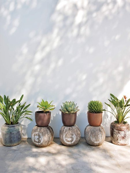 Succulents sitting on dried coconut gourds- design addict mom