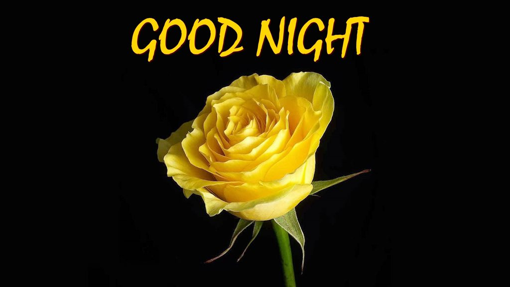 Beautiful Yellow Good Night Flower