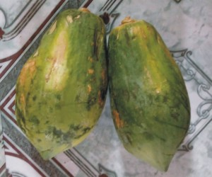 pawpaw or papaya fruit