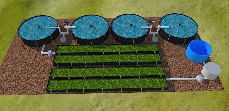 Bio entorno s c acuicultura for Cria de tilapia en estanques plasticos