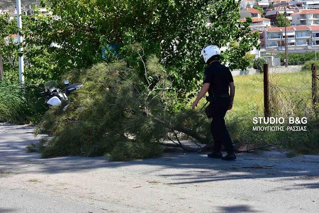 Πτώση μεγάλης κλάρας δέντρου στο Ναύπλιο