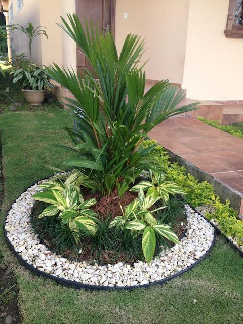 jardim pequeno com coqueiro