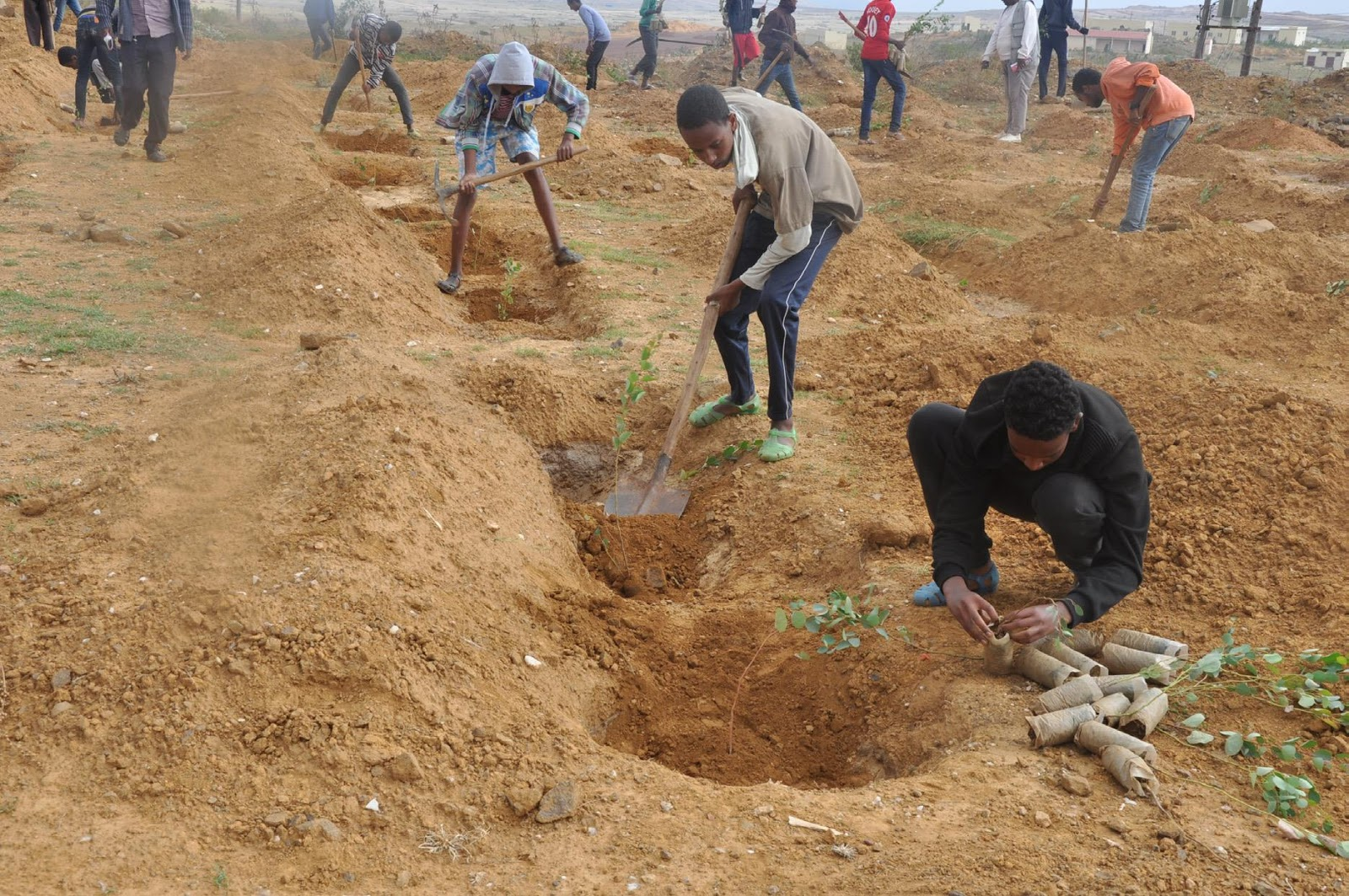 <Summer Work Program on the Path of Making Eritrea Green Again
