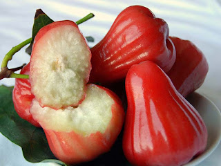 Rose Apple Fruit Pictures