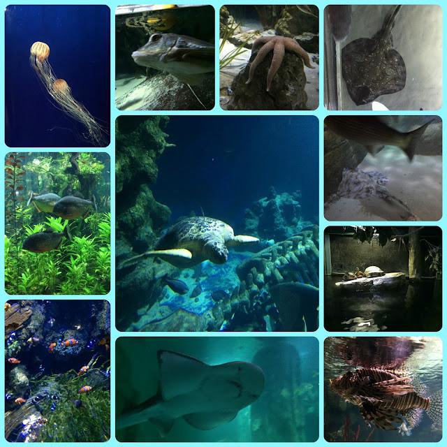 Huge variety of fish in the London Aquarium