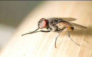 Μύγες ΤΕΛΟΣ - Εξαφανίστε τις Μύγες από το Σπίτι σας, με Αυτό το Απίστευτο Κόλπο! [photos]