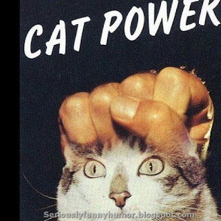 Cat Power fun meme!