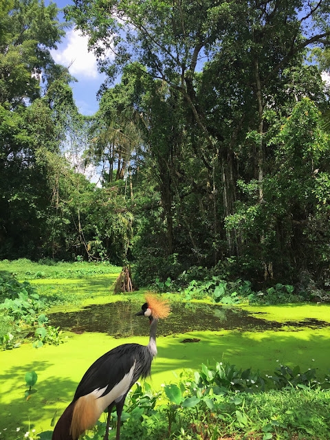[TRIP] Zoo Taiping, MY