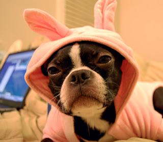 Funny Easter pets