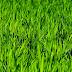 Zagospodarowanie obszaru zieleni nieurządzonej w rejonie ul. Hallera i Gryfa Pomorskiego (2014, 2015 rok)