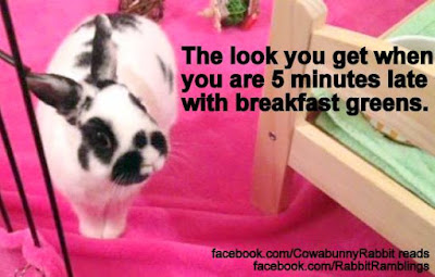 Funny Memes Clean 2018 : Rabbit ramblings: funny bunny memes