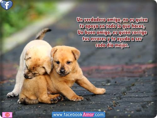 Frases De Amistad Para Facebook