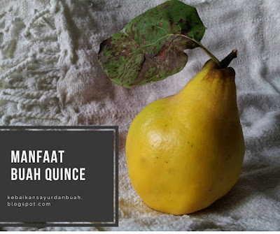 buah quince