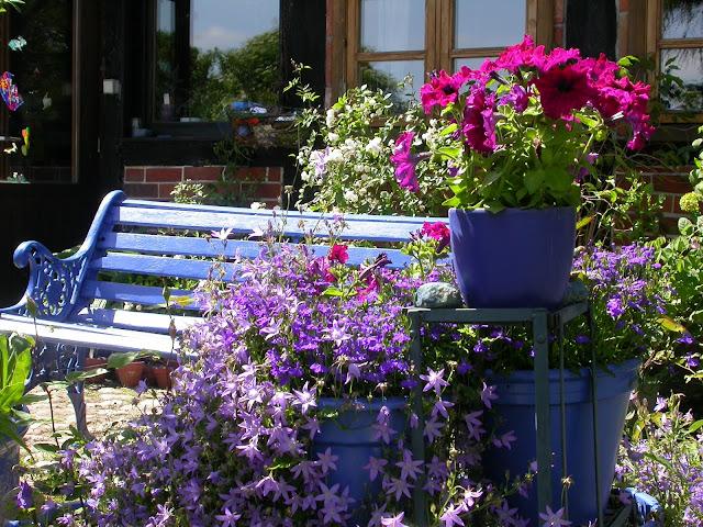 re clematis integrifolia 39 arabella 39 4. Black Bedroom Furniture Sets. Home Design Ideas