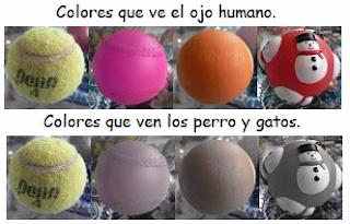 Los científicos han descubierto que mientras que los humanos tienen tres células fotorreceptoras de cono en los ojos para ver el color del arco iris, nuestros queridos amigos tienen sólo dos conos