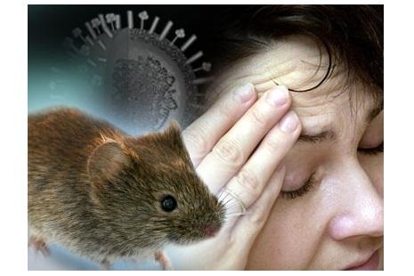 Hantavirus : Symptome Ursachen und Abhilfen