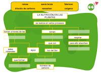 http://www.ceipjuanherreraalcausa.es/Recursosdidacticos/ANAYA%20DIGITAL/CUARTO/Cono/uni04_activi1_nutricion_plantas_n/