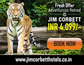 Best Hotel for You and Your Family in Jim Corbett National Park