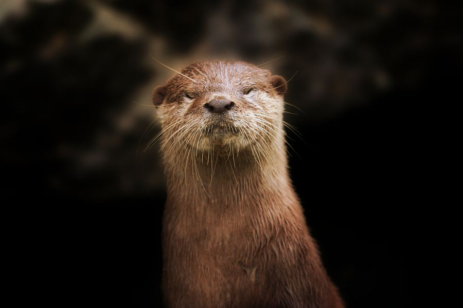 Free Cool Wallpapers Otter Wallpaper