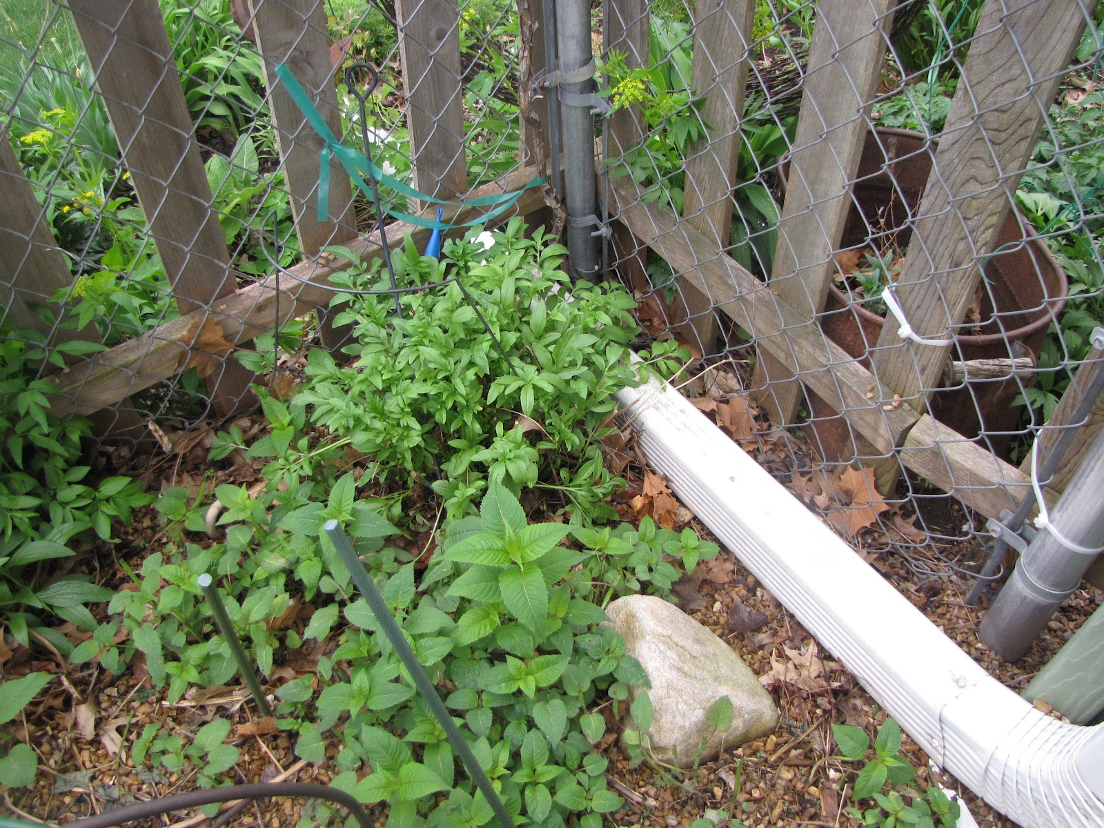A Corner Garden: Spring in Our Small Back Yard