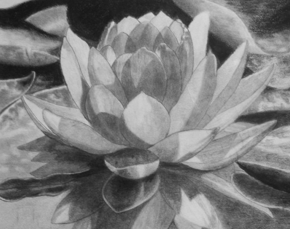 Download 520 Gambar Bunga Teratai Pensil Paling Keren
