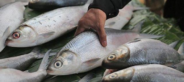 Budidaya Ikan Bandeng