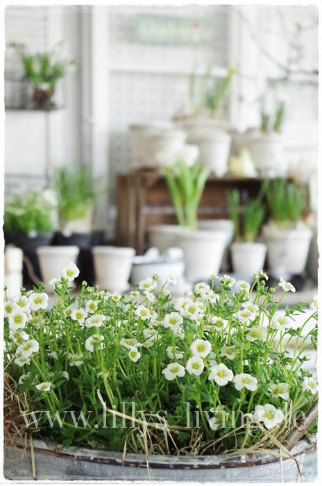 Mein lillys living for Pflanzen innenbereich