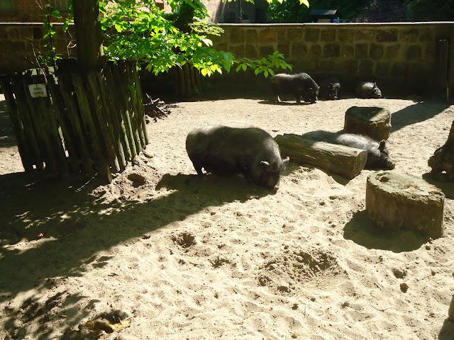 Zoos in Brandenburg Zoo Eberswalde