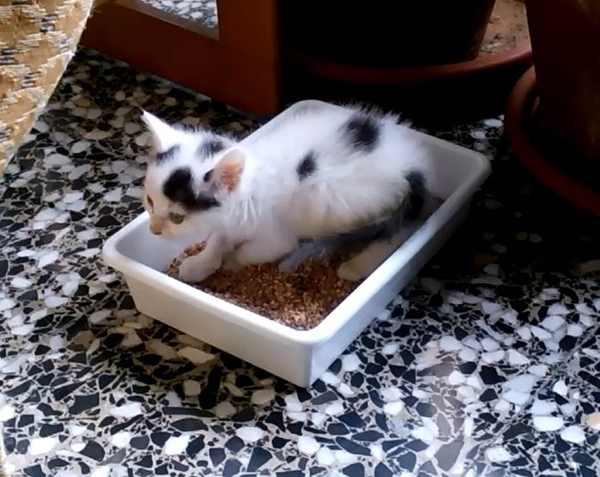 arenero-gatito-aprendizaje-arena