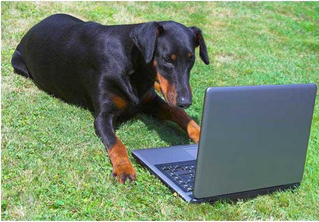 Image result for watchdog