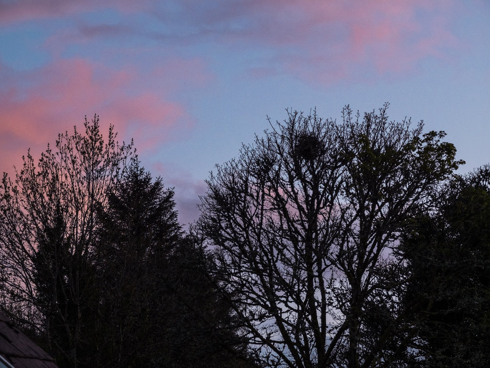 Gentle pink cloud on a light blue sky at sunset with big mature trees in the foreground.